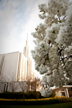 The side of the Seattle Washington Temple, with a partial view of the grounds and a white flowering tree.