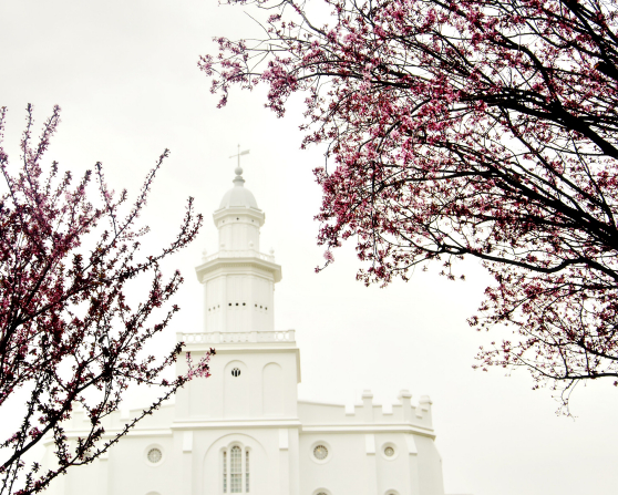 The spire of the St. George Utah Temple, framed by pink flowering trees.