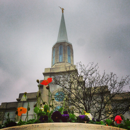 Flowers on the grounds of the St. Louis Missouri Temple, with the spire in the background rising above the trees.