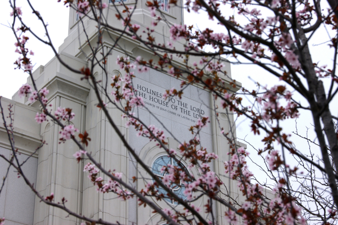 A view of the inscription on the St. Louis Missouri Temple, through the branches of a flowering tree.