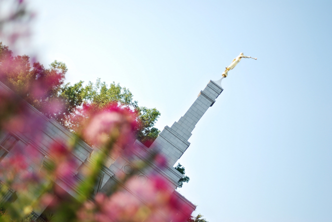 The spire of the St. Paul Minnesota Temple, viewed through a flowering bush.