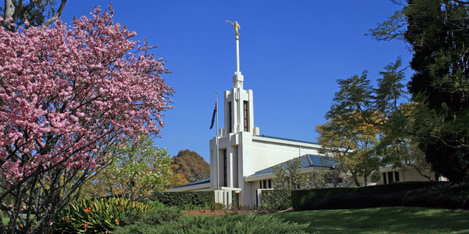 A view of the spire of the Sydney Australia Temple, with a view of the surrounding grounds, including a flowering tree.