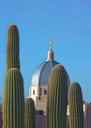 A photograph of saguaro cacti with the Tucson Arizona Temple dome visible in the background.