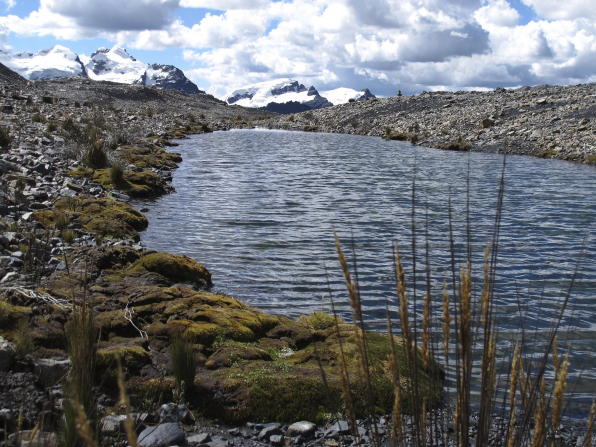 The Andes Mountains, covered with snow, stand in the background, with a lake in front bordered by weeds and rocks.