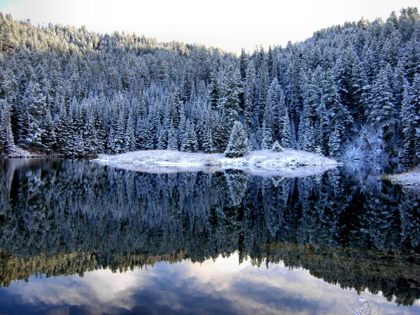 Pine trees covered in snow on a mountainside are reflected in a lake at their base.
