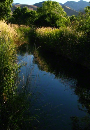 A small stream runs through a meadow near trees and mountains.