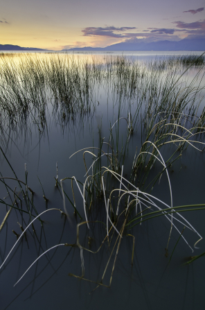 An image of Lincoln Beach with grass and reeds growing up out of the water and mountains in the background.