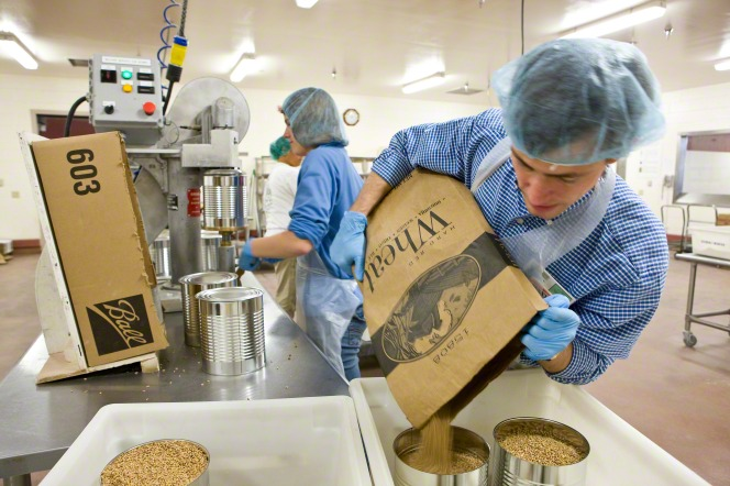 A man in blue gloves, a plaid shirt, and a hairnet pouring a bag of wheat into large cans at the cannery.