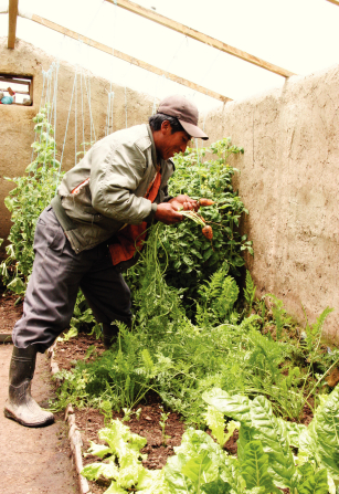 A man in irrigation boots, a green jacket, and a brown hat, standing in a garden and looking at carrots.