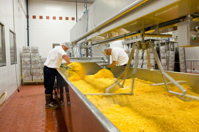 Two men in white shirts, blue gloves, and hairnets stirring yellow cheese in a large metal bin at Welfare Square.