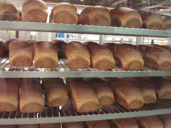 Three rows of light brown, fresh-baked bread loaves on shelves at the bishops' storehouse.