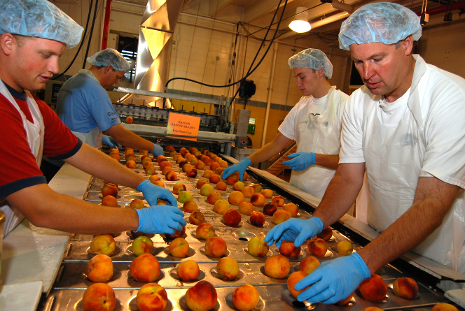 Four men in blue gloves, aprons, and hairnets sorting peaches on the production line in Welfare Square.