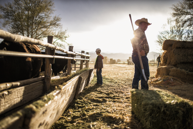 A young boy standing by the cows' manger and a man in a cowboy hat standing by a bale of hay.